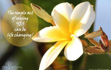 Gratitude Challenge … Accepted!
